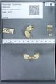 http://mczbase.mcz.harvard.edu/specimen_images/ent-lepidoptera/images/2010_01_11/IMG_028422.JPG