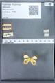 http://mczbase.mcz.harvard.edu/specimen_images/ent-lepidoptera/images/2010_01_11/IMG_028446.JPG
