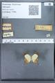 http://mczbase.mcz.harvard.edu/specimen_images/ent-lepidoptera/images/2010_01_11/IMG_028447.JPG