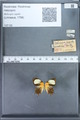 http://mczbase.mcz.harvard.edu/specimen_images/ent-lepidoptera/images/2010_01_11/IMG_028450.JPG