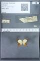 http://mczbase.mcz.harvard.edu/specimen_images/ent-lepidoptera/images/2010_01_11/IMG_028451.JPG