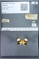 http://mczbase.mcz.harvard.edu/specimen_images/ent-lepidoptera/images/2010_01_11/IMG_028453.JPG