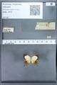 http://mczbase.mcz.harvard.edu/specimen_images/ent-lepidoptera/images/2010_01_11/IMG_028455.JPG