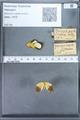 http://mczbase.mcz.harvard.edu/specimen_images/ent-lepidoptera/images/2010_01_11/IMG_028458.JPG