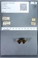 http://mczbase.mcz.harvard.edu/specimen_images/ent-lepidoptera/images/2010_01_13/IMG_028897.JPG