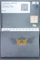 http://mczbase.mcz.harvard.edu/specimen_images/ent-lepidoptera/images/2010_01_13/IMG_029055.JPG