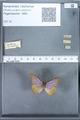 http://mczbase.mcz.harvard.edu/specimen_images/ent-lepidoptera/images/2010_01_13/IMG_029088.JPG