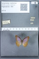 http://mczbase.mcz.harvard.edu/specimen_images/ent-lepidoptera/images/2010_01_13/IMG_029089.JPG