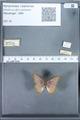 http://mczbase.mcz.harvard.edu/specimen_images/ent-lepidoptera/images/2010_01_13/IMG_029100.JPG