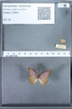 http://mczbase.mcz.harvard.edu/specimen_images/ent-lepidoptera/images/2010_01_13/IMG_029102.JPG