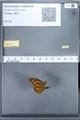 http://mczbase.mcz.harvard.edu/specimen_images/ent-lepidoptera/images/2010_01_14/IMG_029268.JPG
