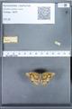 http://mczbase.mcz.harvard.edu/specimen_images/ent-lepidoptera/images/2010_01_14/IMG_029269.JPG