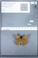 http://mczbase.mcz.harvard.edu/specimen_images/ent-lepidoptera/images/2010_02_02/IMG_031072.JPG