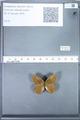 http://mczbase.mcz.harvard.edu/specimen_images/ent-lepidoptera/images/2010_02_02/IMG_031073.JPG