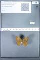 http://mczbase.mcz.harvard.edu/specimen_images/ent-lepidoptera/images/2010_02_02/IMG_031075.JPG