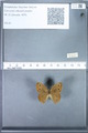 http://mczbase.mcz.harvard.edu/specimen_images/ent-lepidoptera/images/2010_02_02/IMG_031076.JPG