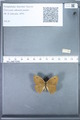 http://mczbase.mcz.harvard.edu/specimen_images/ent-lepidoptera/images/2010_02_02/IMG_031077.JPG