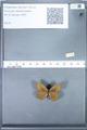 http://mczbase.mcz.harvard.edu/specimen_images/ent-lepidoptera/images/2010_02_02/IMG_031078.JPG