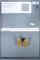http://mczbase.mcz.harvard.edu/specimen_images/ent-lepidoptera/images/2010_02_02/IMG_031079.JPG