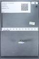 http://mczbase.mcz.harvard.edu/specimen_images/ent-lepidoptera/images/2010_02_11/IMG_031640.JPG