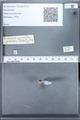 http://mczbase.mcz.harvard.edu/specimen_images/ent-lepidoptera/images/2010_02_11/IMG_031656.JPG