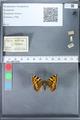 http://mczbase.mcz.harvard.edu/specimen_images/ent-lepidoptera/images/2010_02_16/IMG_032107.JPG