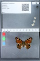 http://mczbase.mcz.harvard.edu/specimen_images/ent-lepidoptera/images/2010_02_18/IMG_032352.JPG