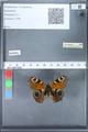 http://mczbase.mcz.harvard.edu/specimen_images/ent-lepidoptera/images/2010_02_18/IMG_032367.JPG