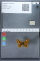 http://mczbase.mcz.harvard.edu/specimen_images/ent-lepidoptera/images/2010_02_19/IMG_032562.JPG