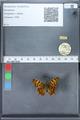 http://mczbase.mcz.harvard.edu/specimen_images/ent-lepidoptera/images/2010_02_19/IMG_032566.JPG