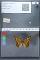 http://mczbase.mcz.harvard.edu/specimen_images/ent-lepidoptera/images/2010_02_19/IMG_032577.JPG