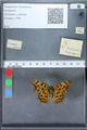 http://mczbase.mcz.harvard.edu/specimen_images/ent-lepidoptera/images/2010_02_19/IMG_032583.JPG