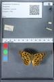 http://mczbase.mcz.harvard.edu/specimen_images/ent-lepidoptera/images/2010_02_19/IMG_032585.JPG