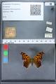http://mczbase.mcz.harvard.edu/specimen_images/ent-lepidoptera/images/2010_02_19/IMG_032635.JPG