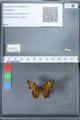 http://mczbase.mcz.harvard.edu/specimen_images/ent-lepidoptera/images/2010_02_23/IMG_033042.JPG