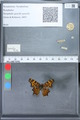 http://mczbase.mcz.harvard.edu/specimen_images/ent-lepidoptera/images/2010_02_23/IMG_033047.JPG