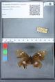 http://mczbase.mcz.harvard.edu/specimen_images/ent-lepidoptera/images/2010_02_26/IMG_033464.JPG
