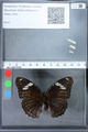 http://mczbase.mcz.harvard.edu/specimen_images/ent-lepidoptera/images/2010_03_01/IMG_033725.JPG