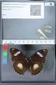 http://mczbase.mcz.harvard.edu/specimen_images/ent-lepidoptera/images/2010_03_01/IMG_033727.JPG