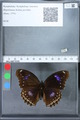 http://mczbase.mcz.harvard.edu/specimen_images/ent-lepidoptera/images/2010_03_01/IMG_033754.JPG