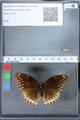 http://mczbase.mcz.harvard.edu/specimen_images/ent-lepidoptera/images/2010_03_01/IMG_033757.JPG