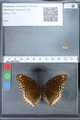 http://mczbase.mcz.harvard.edu/specimen_images/ent-lepidoptera/images/2010_03_01/IMG_033758.JPG