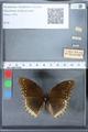 http://mczbase.mcz.harvard.edu/specimen_images/ent-lepidoptera/images/2010_03_01/IMG_033759.JPG