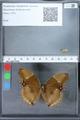 http://mczbase.mcz.harvard.edu/specimen_images/ent-lepidoptera/images/2010_03_01/IMG_033760.JPG