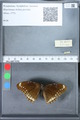 http://mczbase.mcz.harvard.edu/specimen_images/ent-lepidoptera/images/2010_03_01/IMG_033761.JPG