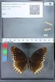 http://mczbase.mcz.harvard.edu/specimen_images/ent-lepidoptera/images/2010_03_01/IMG_033764.JPG