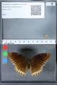 http://mczbase.mcz.harvard.edu/specimen_images/ent-lepidoptera/images/2010_03_01/IMG_033765.JPG