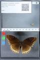 http://mczbase.mcz.harvard.edu/specimen_images/ent-lepidoptera/images/2010_03_01/IMG_033767.JPG