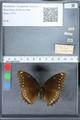 http://mczbase.mcz.harvard.edu/specimen_images/ent-lepidoptera/images/2010_03_01/IMG_033768.JPG