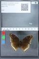 http://mczbase.mcz.harvard.edu/specimen_images/ent-lepidoptera/images/2010_03_01/IMG_033770.JPG